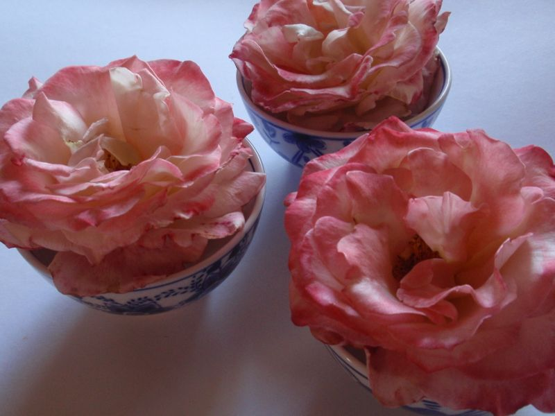 Roses as ice cream